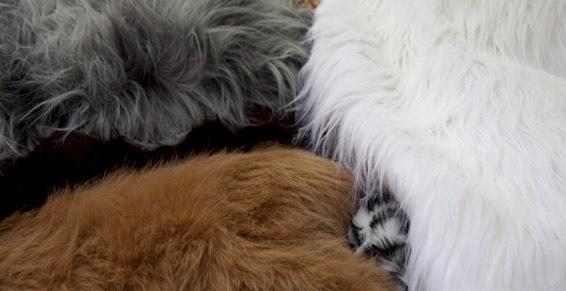 Trois couleurs différentes de fourrures
